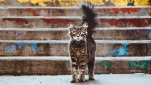 La plante de curcuma est-elle toxique pour les animaux ?
